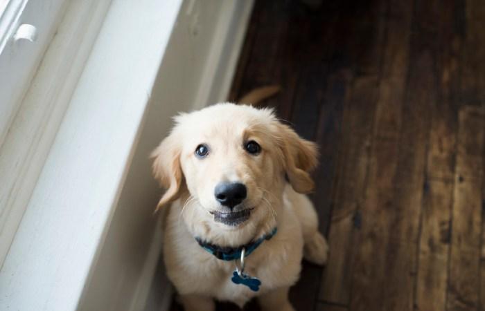 Dayton-Ohio-National-Dog-Day-Session-by-Ashley-Lynn-Photography1008