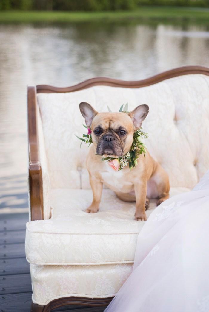 Dayton wedding photographer- Flower dog
