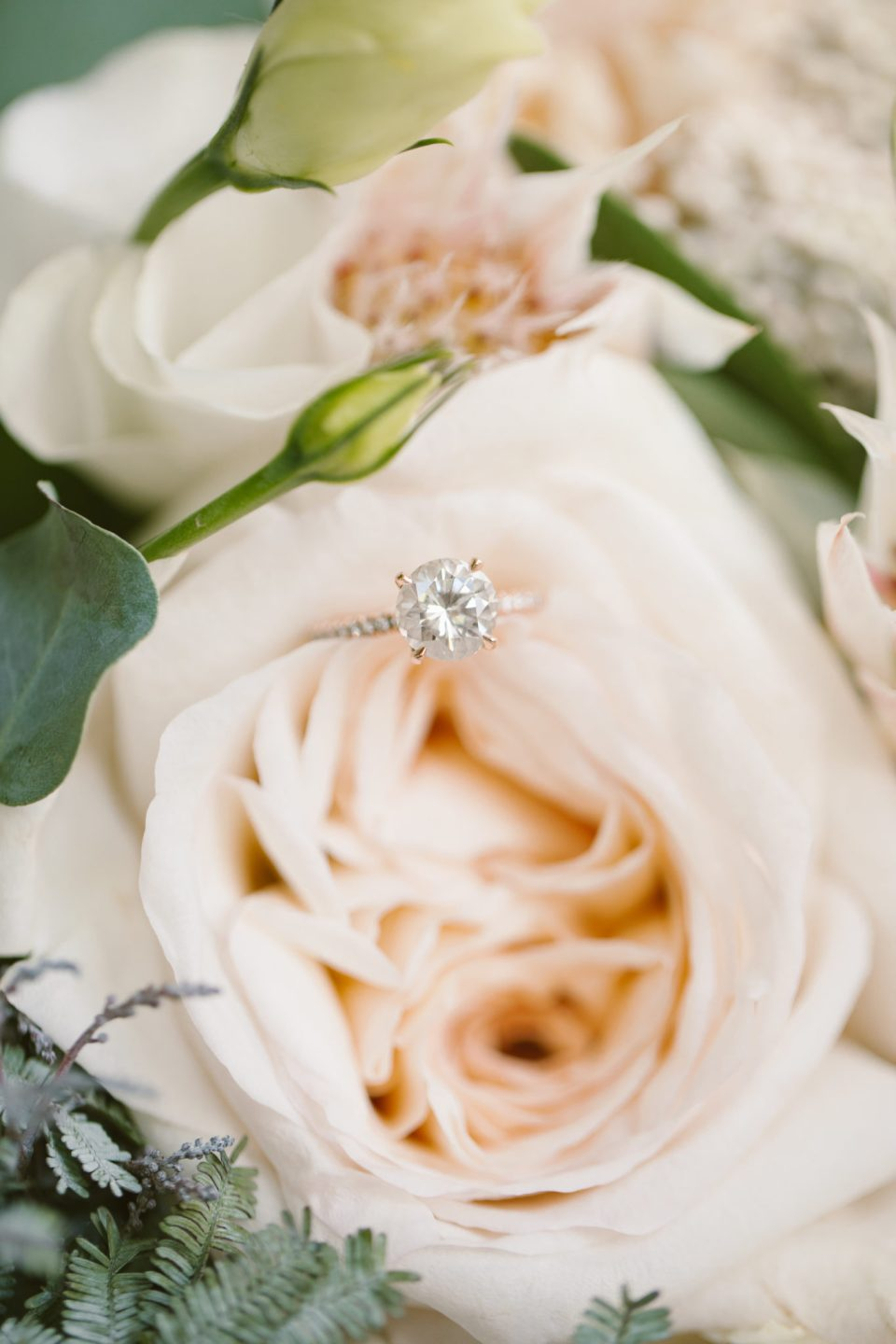 bride's wedding ring on rose photographed by Ashley Mac Photographs