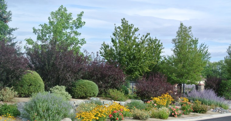 Cooperative Extension offers classes for landscapers, nursery workers