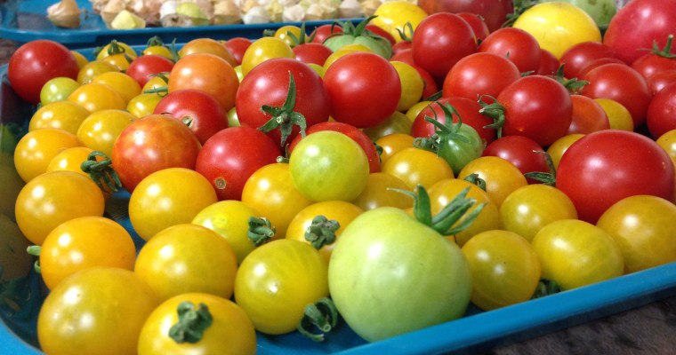 Food Safety in the Edible Garden