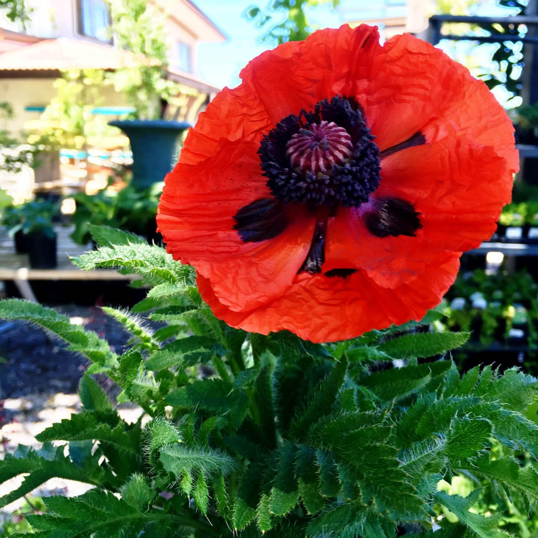 Honoring Fallen Soldiers in the Garden