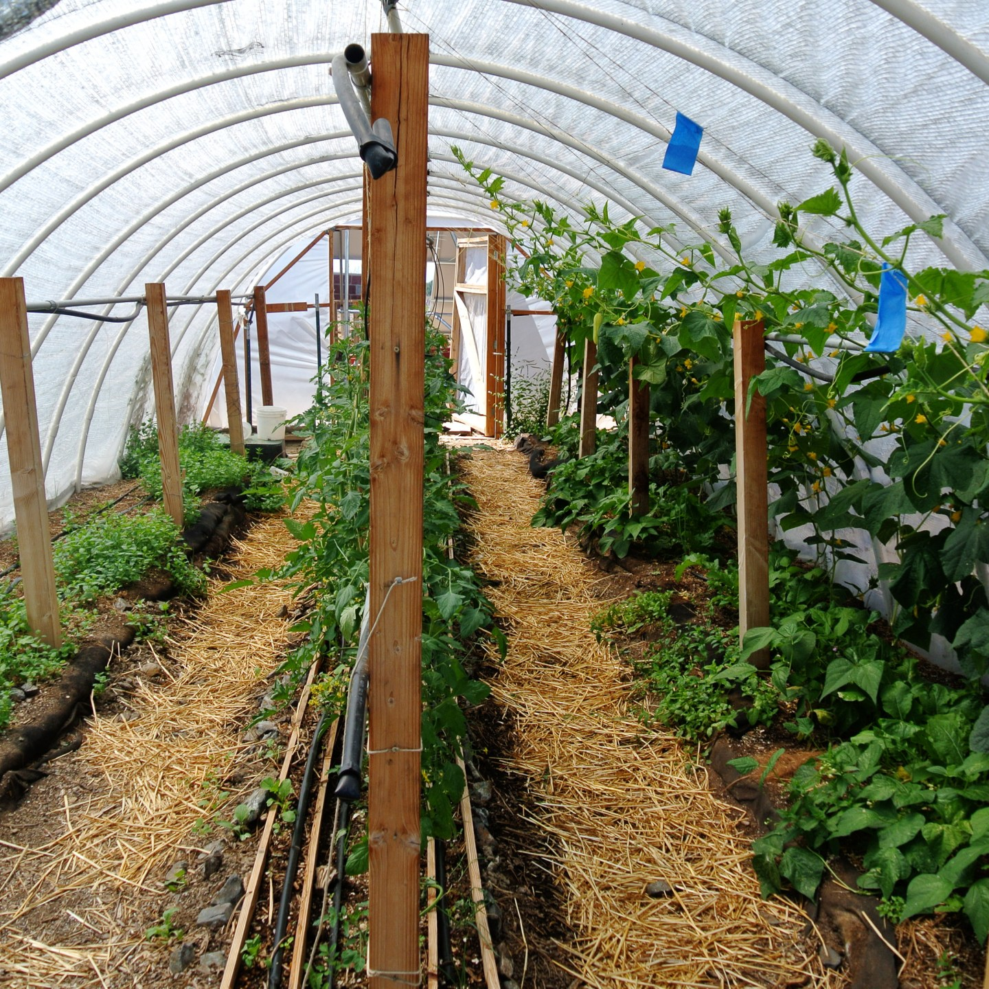 Winter Is Coming and a Hoop House Would Help