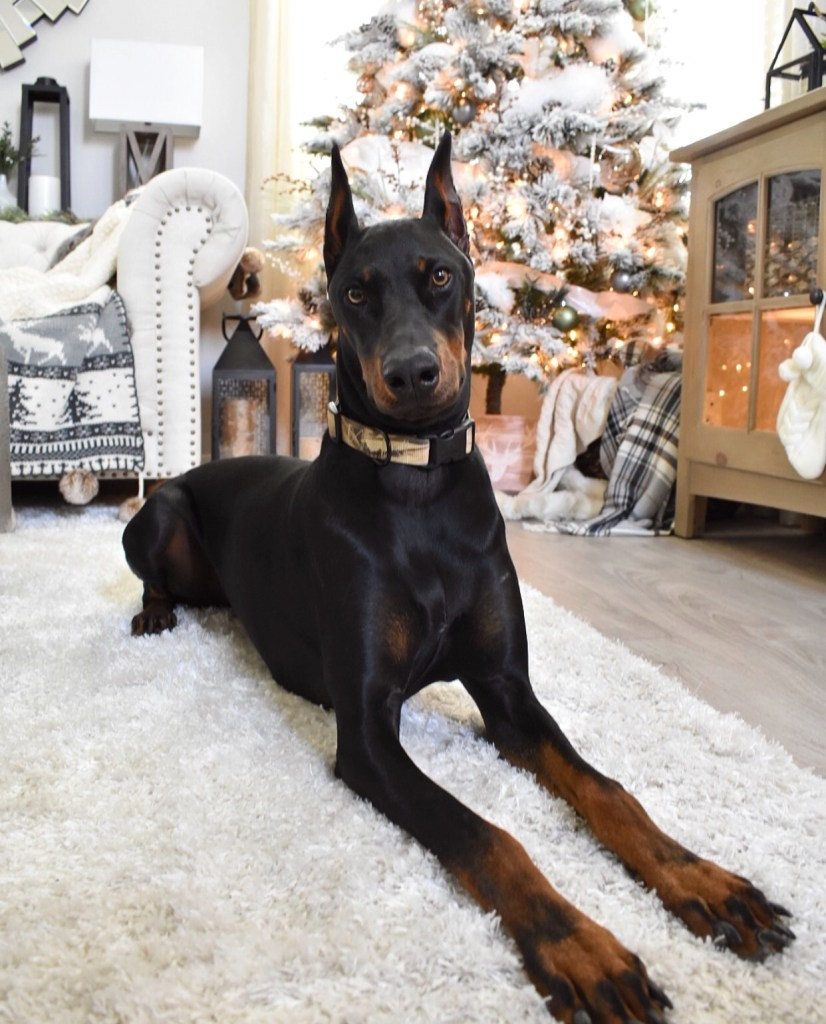 Ashley Nicole Interiors Christmas Decor Doberman