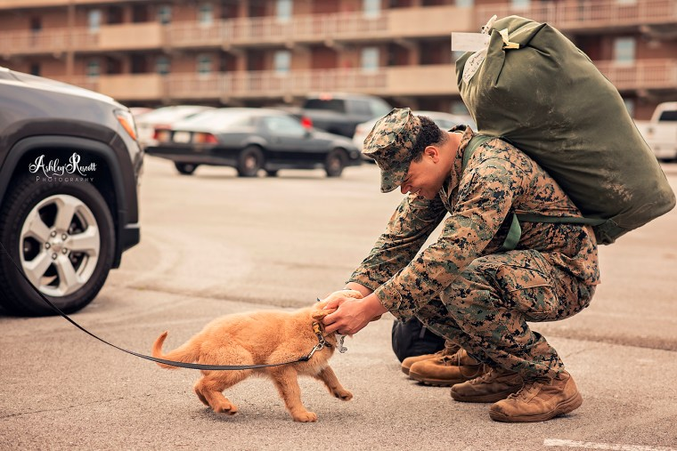 marine meets his puppy after returning from deployment