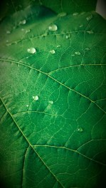 By Ashley Strange | Water Drops On Leaf