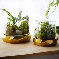 west-elm-roar-rabbit-freeform-terrariums-ashley-weston