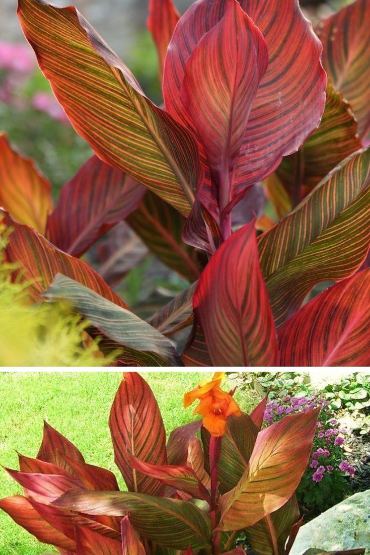 fall foliage ideas