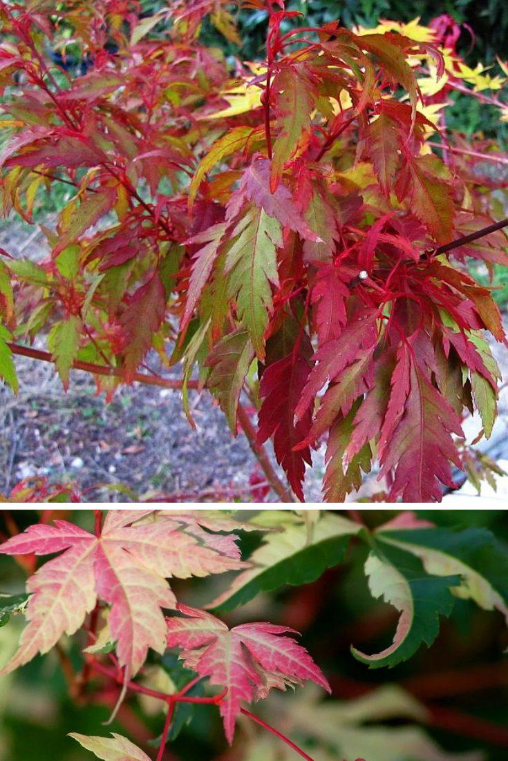 colorful foliage el paso