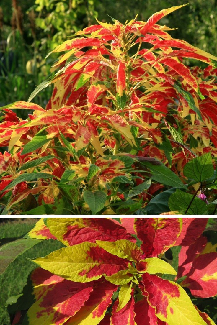 new england fall foliage tours