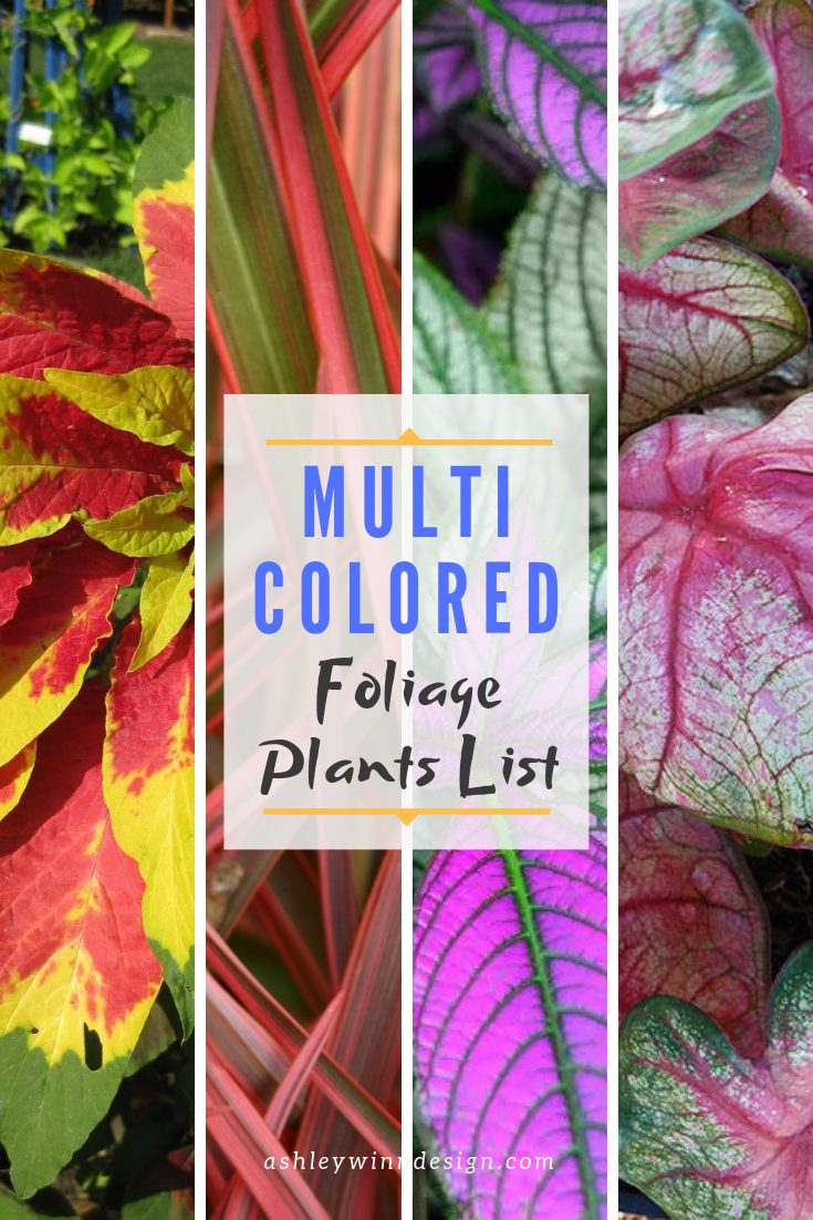 colorful foliage ideas