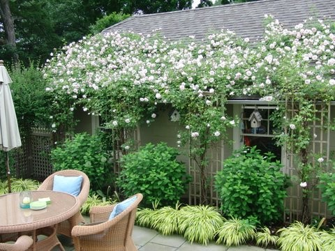 english rose garden ideas