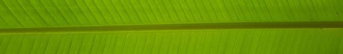 green center piece of a banana leaf