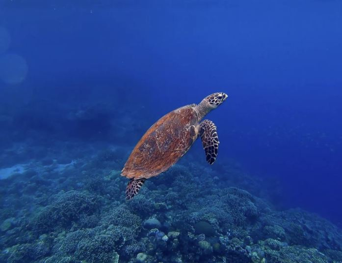 sea turtle in the ocean from scuba diving life lessons post by ashmonster.com