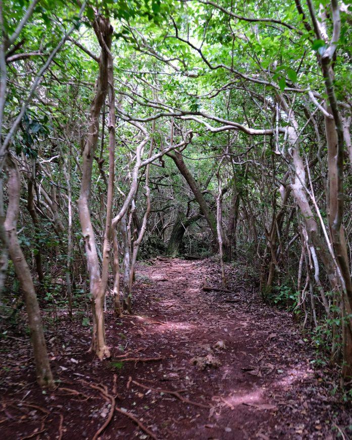 photo of a walking trail in bermuda