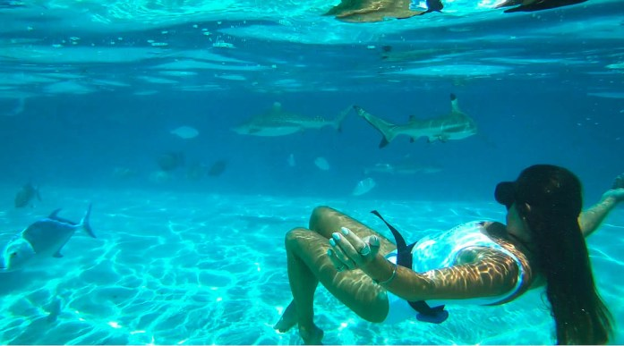swimming with sharks and Rays in french polynesia