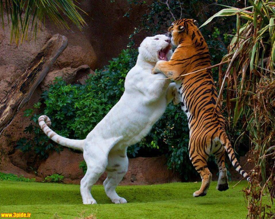 کدام حیوان به بهشت میرود