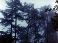 Fog Vico Road 2006