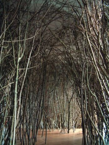 The forest by Olafur Eliasson