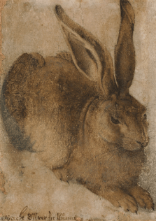 Hans Hoffmann, Hare (after Albrecht Dürer), Collection National Gallery of Ireland