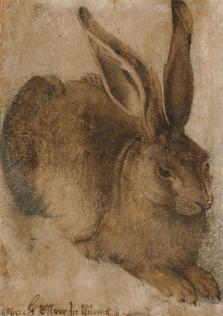 Hans Hoffmann, Hare (after Albrecht Dürer), Collection National Gallery of Ireland
