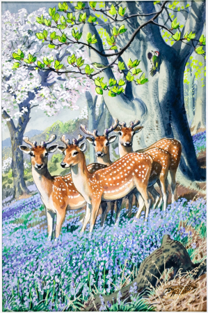 From WHAT TO LOOK FOR IN SPRING, 1961. Illustration by Charles Frederick Tunnicliffe