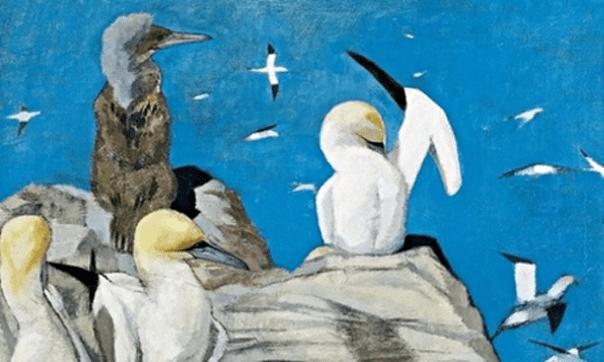 Gannets by John Busby