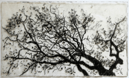 Bough, 2015. Chinagraph on resin, 8 x 13 cm