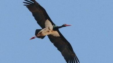 Photo of العثور على طيور نادرة تشاهد لأول مرة في العراق
