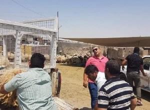 Photo of امانة بغداد تنفذ حملة لمصادرة الأغنام وغلق المحال المخالفة شمال شرقي العاصمة