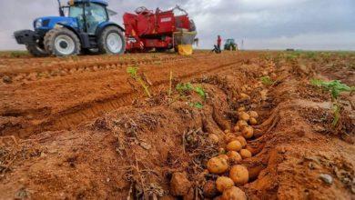 Photo of انطلاق عملية حصاد ٢٠٠ دونم من محصول البطاطا عالي الجودة  في مزرعة الفردوس في محافظة كربلاء الحبيبة