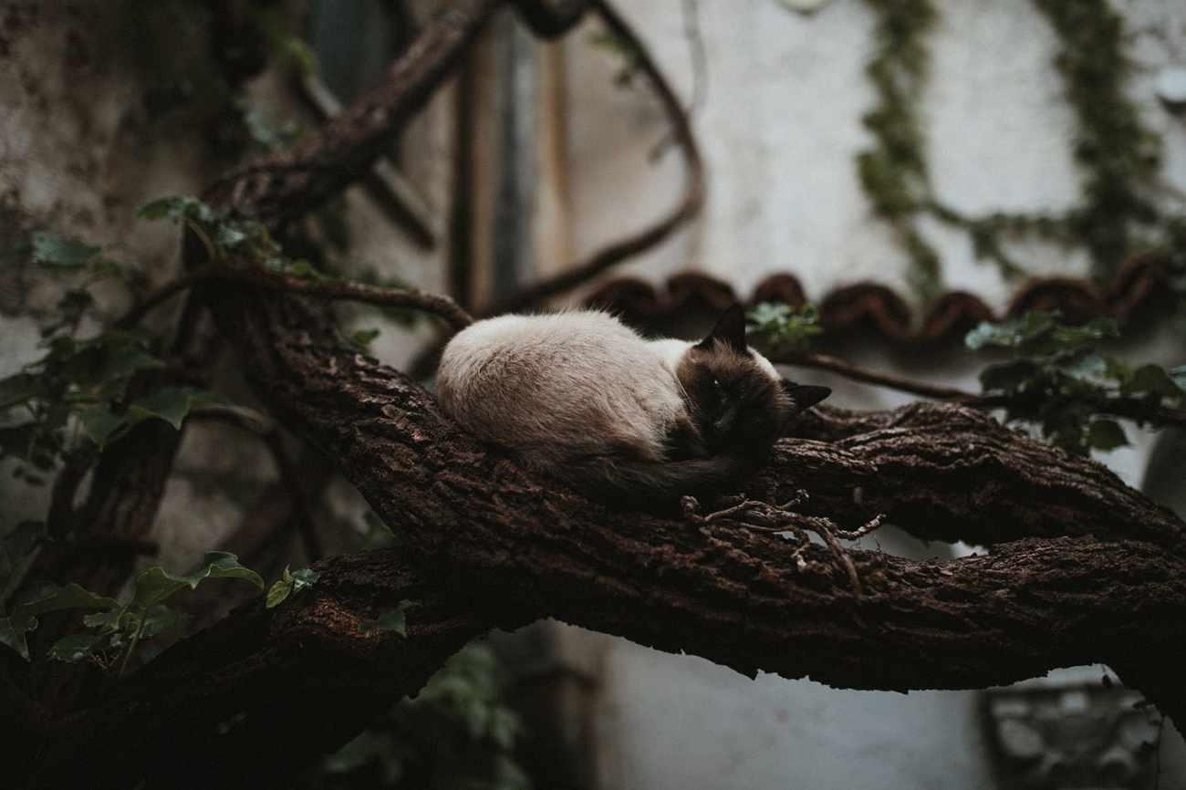 Cat sleeping in tree in Ravello, Italy