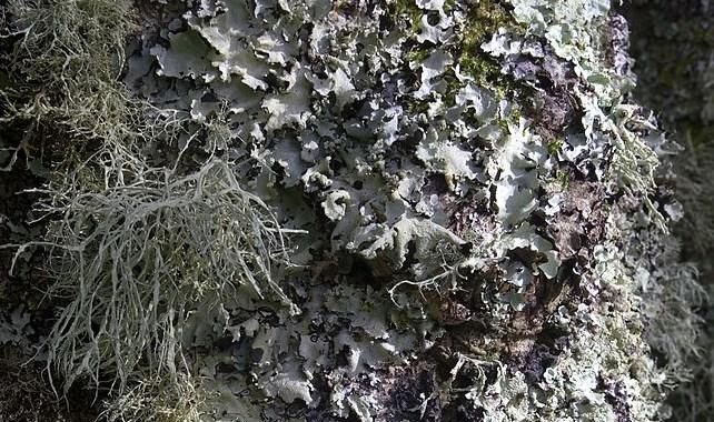 lichen community