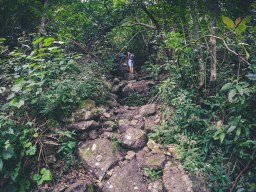 Hiking Pieter Both Mountain Mauritius - Into the Woods