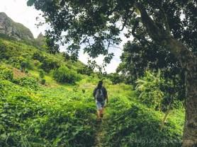 Hiking Pieter Both Mountain Mauritius - Along the Green