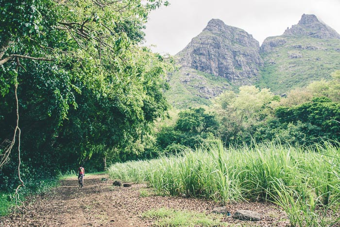MTB Mauritius - Bassin Estate - In the Fields