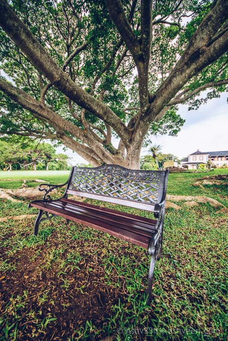 Monuments Day Apr 2017 Mauritius-State House Garden Bench