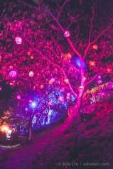 Porlwi by Nature - Citadel - Tree of Light