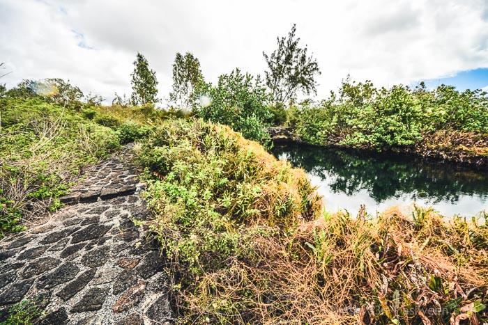 Roches Noires - The Wetlands