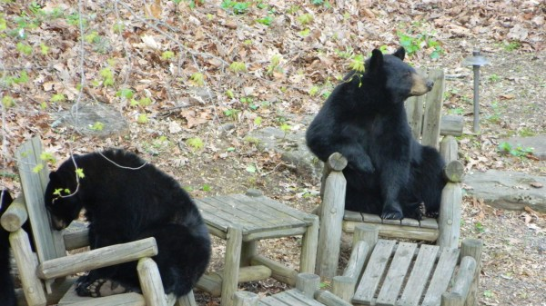 Marketers Bears Chairs Asheville