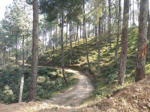Bosques de Dhulikhel
