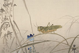 ink drawing of grasshopper on blade of grass