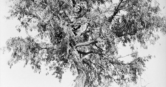 Black and white photo detail of tree branches.