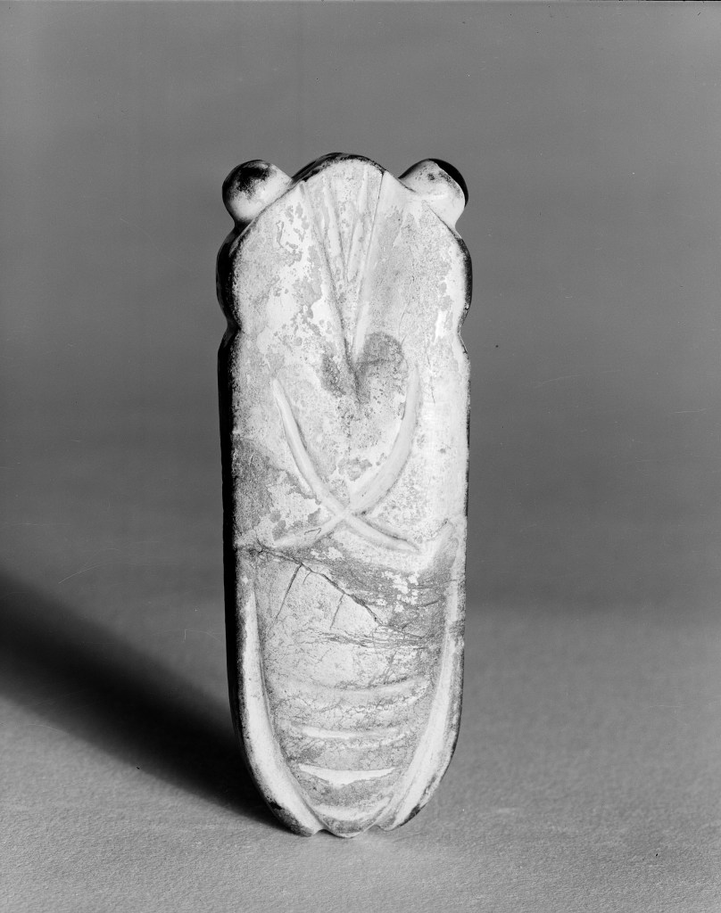 Photo, Agate cicada. Eastern Han dynasty, 24–220 CE., L: 8.2 cm. (3 1/4 in.). Singer catalogue number: [800].