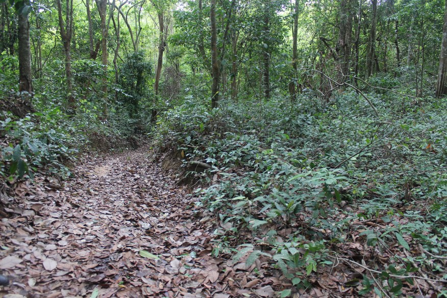 Leaf covered pathway leading through densely forested area