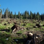 200814122217_deforestation.jpg
