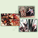 malaysia-palm-oil.jpg