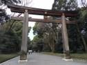 1700 year old cymphor trees torii gate