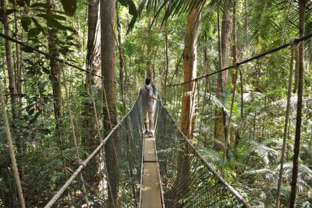 taman negara jungle trekking