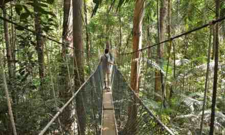 Welcome to the Jungle; Taman Negara jungle trekking adventure